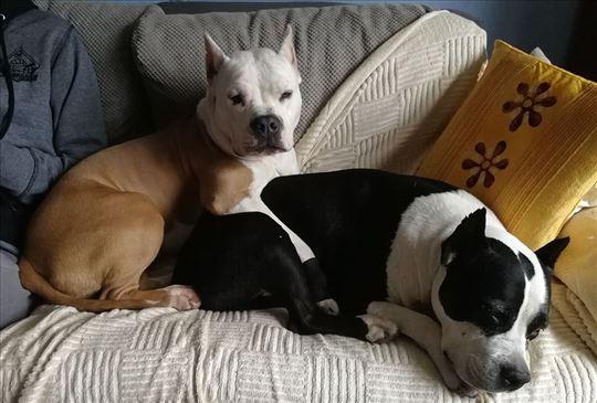 Čuvanje pasa u kući