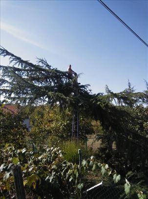 Sečenje drveća i čiščenje placeva