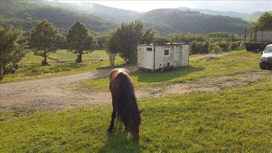 Bosanski brdski konji