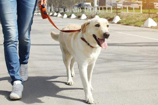 Uslužna šetnja pasa