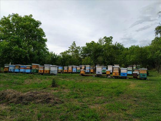 Prodajem livadski i šumski med