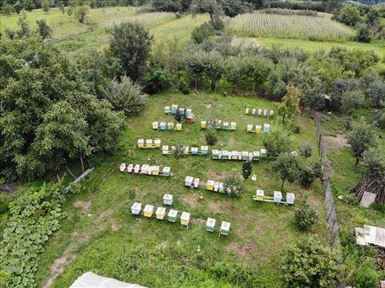 Prodaja pčelinjih društava i rojeva
