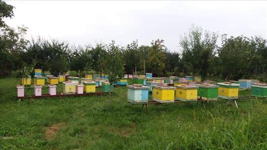 Prodaja pčelinjih društva sa košnicama