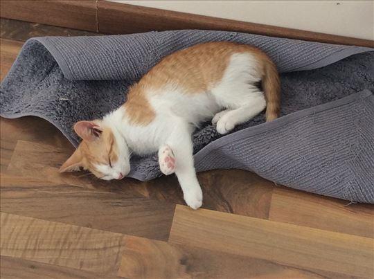 Ginger kittens as a gift - na poklon