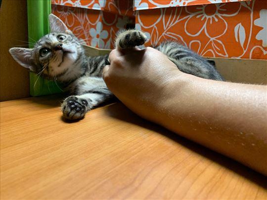 Katty traži dom