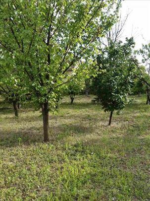 Poljoprivredno zemljište-voćnjak