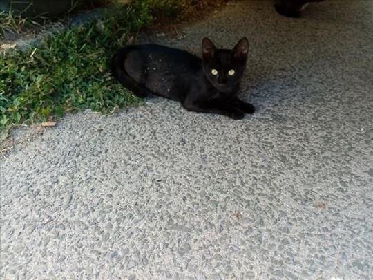 Poklanja se lepa,draga i umiljata mala maca
