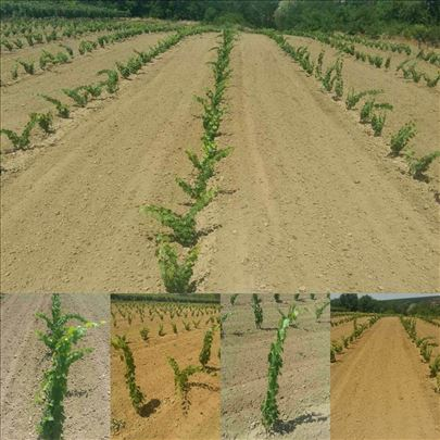 Podizanje vinograda i voćnjaka
