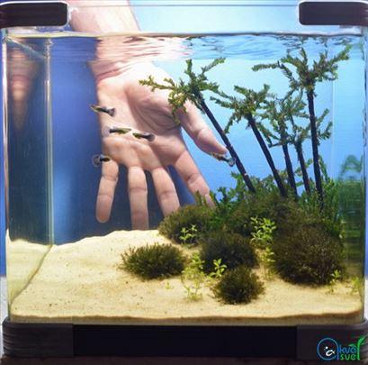 Kvarcni pesak za akvarijum