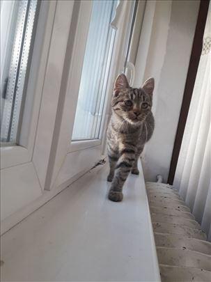 Mimi traži dom