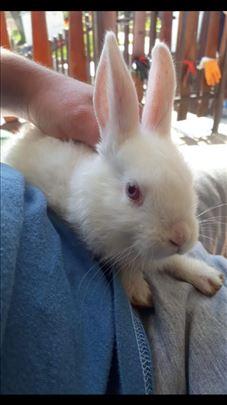 Prodajem zečeve