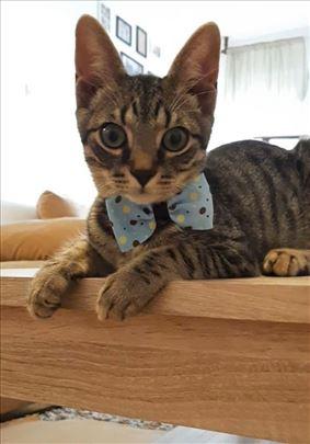 Mačkić Mile Pile, star 4 meseca, traži dom