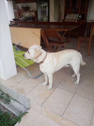 Izgubljen pas