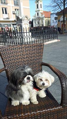 Čuvanje i prevoz malih pasa u kućnim uslovima