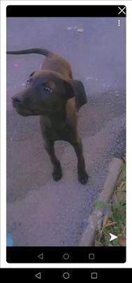 Nestao pas u Nišu, odaziva se na ime DENI!