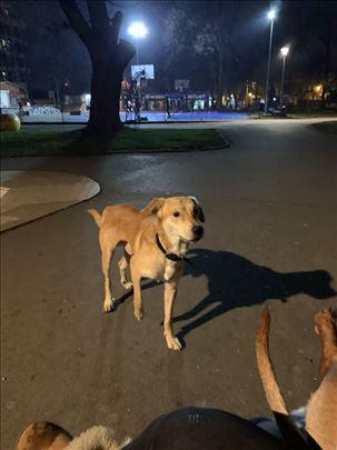 Vidjen pas u Čuburskom parku