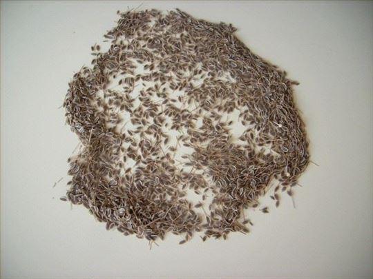 Mirođija, 1 gram (preko 700 semenki)