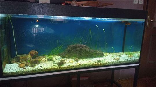 Akvarijum 360l