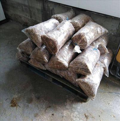 Prodajem zasejane dzakove semenom Bukovace