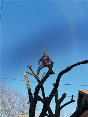 Uređivanje dvorišta i seca stabala