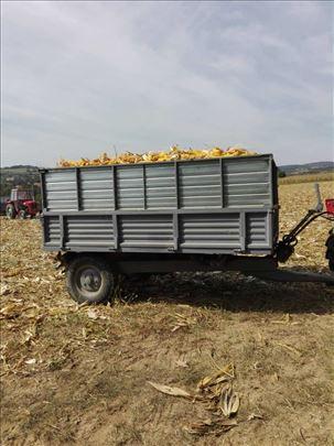Kukuruz na prodaju