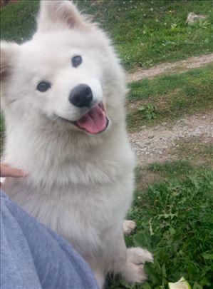 Nestao pas u Rakovici, odaziva se na ime Nora