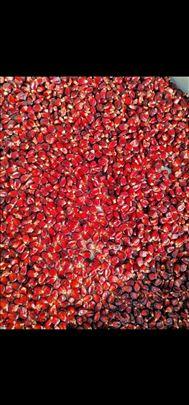 Prodajem seme crvenog kukuruza stare sorte