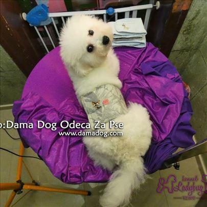 Pojas za pse -jedan komad