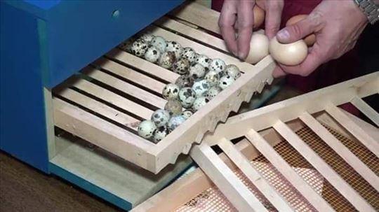 Inkubatori za sva jaja