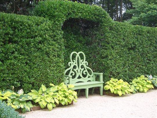 Živa ograda - Evonimus