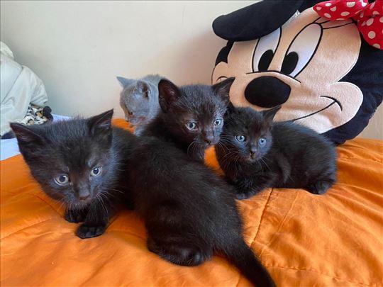 Mali crni macici traze dom