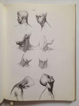Anatomija za umetnike, Ene Barcai