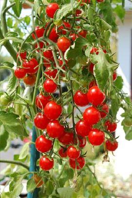 Mikro čeri paradajz za terasu za ukras, jelo
