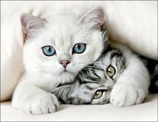 Pet sitting - čuvanje mačaka