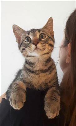 Mačkić Loki Smoki mali zvrk traži svoju porodicu