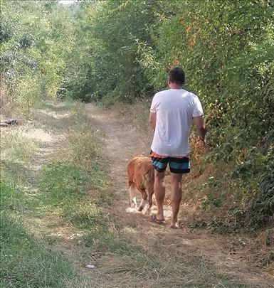 Pansion za pse Beograd