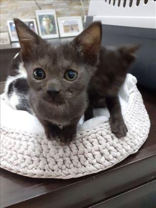Prelepa mačkica Palčica stara 2 meseci traži dom