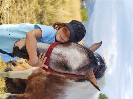 Na prodaju prelepa i mirna welsh kobila