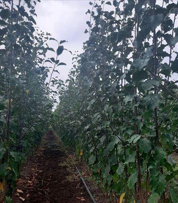 Ponuda voćnih i loznih sadnica za 2021/2022. god.