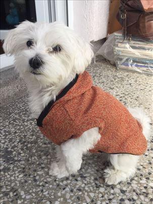 Džemperi za pse ~ novo