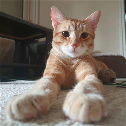 Udomi Makija! Mlad mačor, kastriran, vakcinisan!