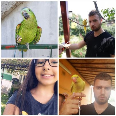 Povodci za papagaje