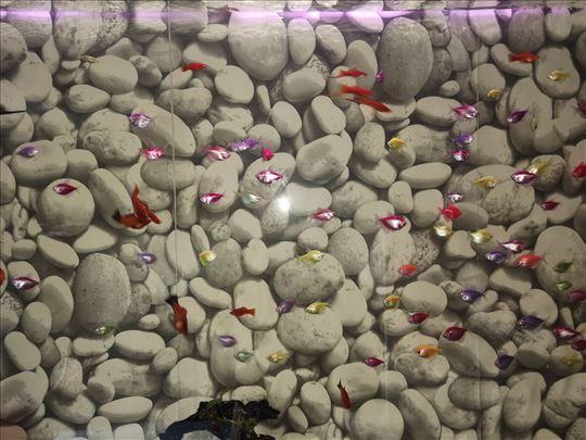 Tertra kolor ribice matične kom. 95