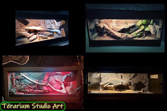Terarium Studio Art - Terarijumi -