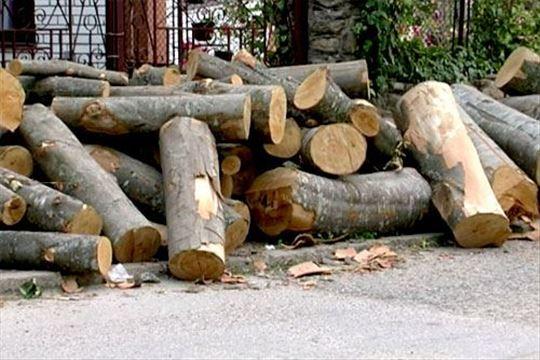 Ogrevno drvo Beograd