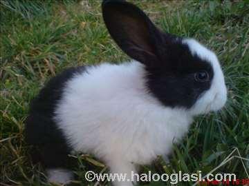 Kunići - zečevi
