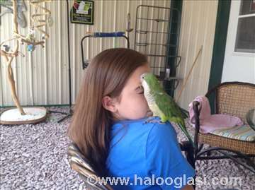 Papagaji kaluđerice