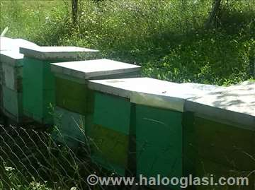 Košnice i pčele