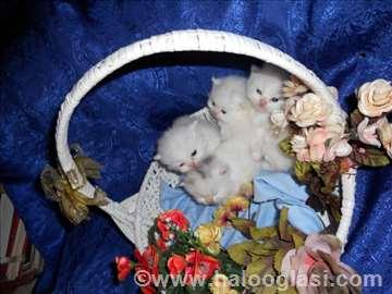 Persijske mace