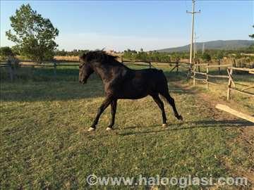 Konj ukrina pluto